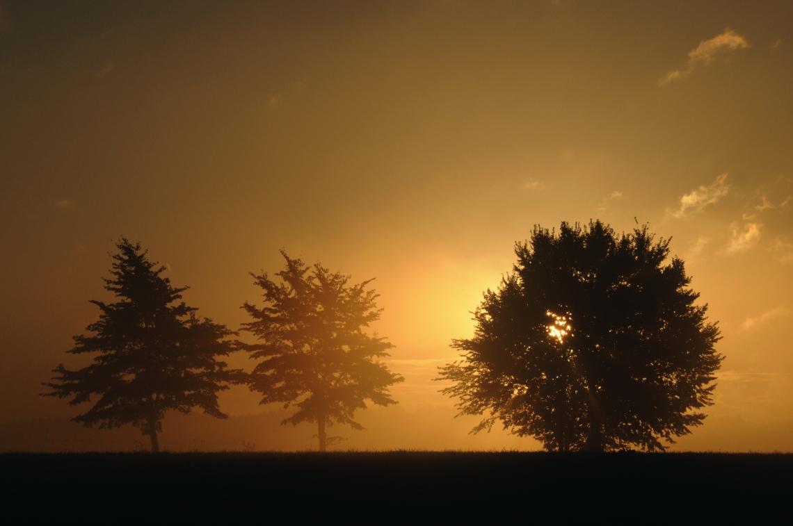 early_in_the_morning_by_dobytek-d5hw7t3